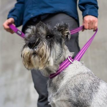 Collier Dog Copenhagen Urban Style Violet