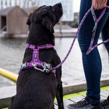 Harnais Dog Copenhagen Comfort Walk Air Violet - Nouvelle Collection
