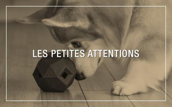 Cadeaux, friandises et jouets de qualité pour chien