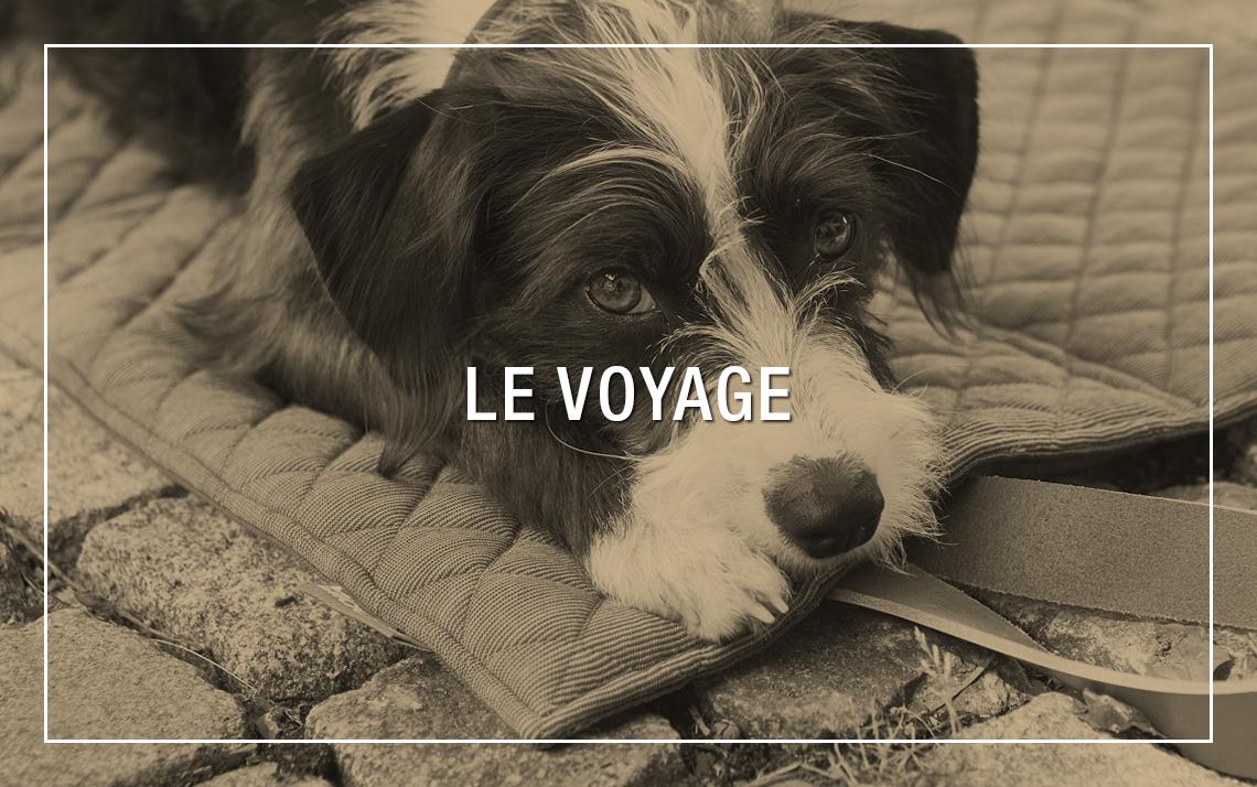 Accessoires et sacs de transport design pour chien